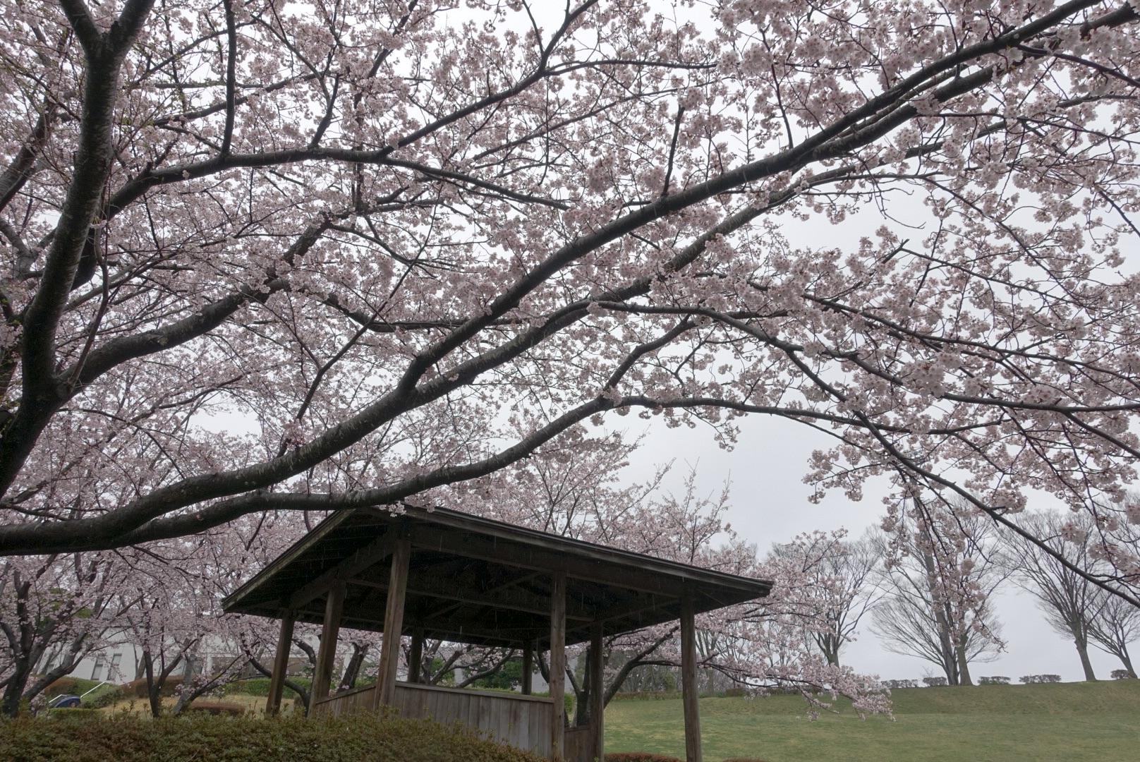 走る薬剤師 大徳秀幸 公式ブログ